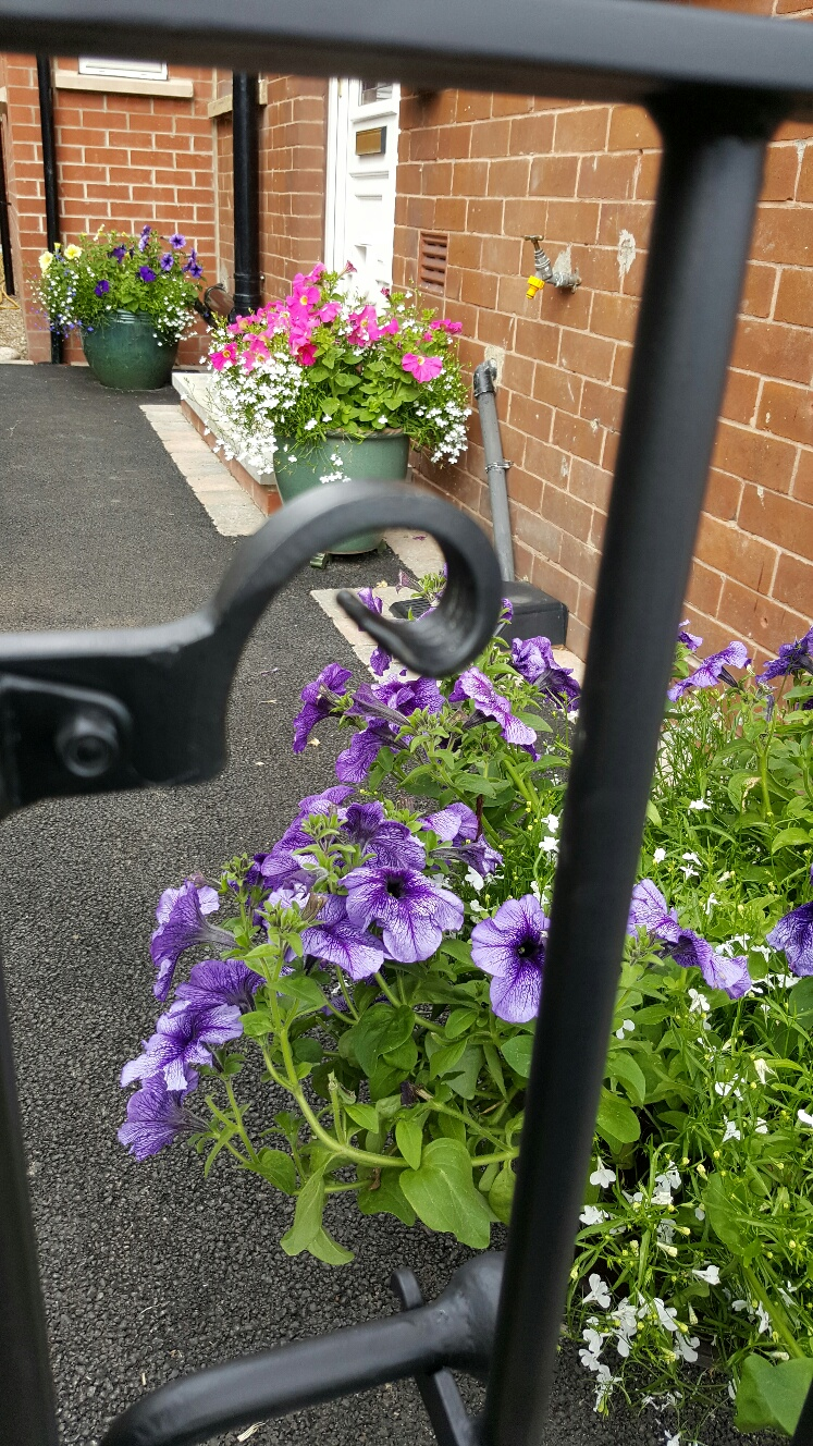 Gate_latch_closeup